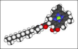 Chlorophyll-a Molecule