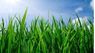 grass-jpg